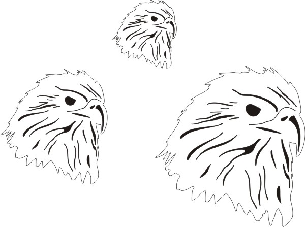 Eagles Heads (3)