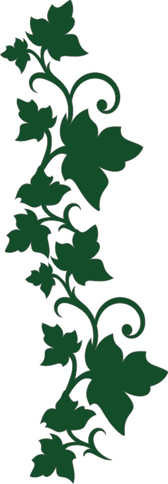 ect store ivy border small trees plants 17 11711